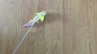 Gecko Dresses Up as Dragon