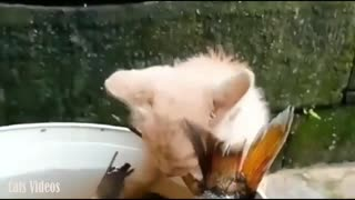 A cat Trying To Steal A Big fish from