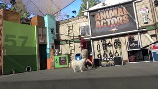 Universal Animal Actors Stage show at Universal Studios Hollywood 4K POV