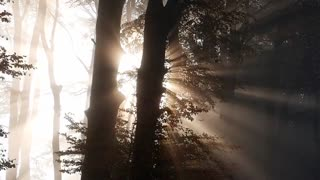 Beautiful forest trip video