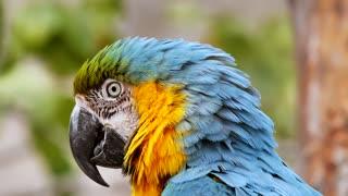 Beautiful blue parrot