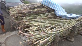Traditional Brown Sugar Making in Taiwan
