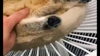 SO Cute Animals Just a relaxing video