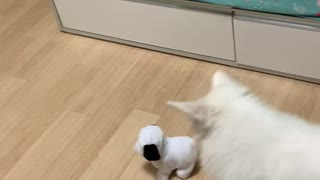 Puppy fighting with a puppy doll