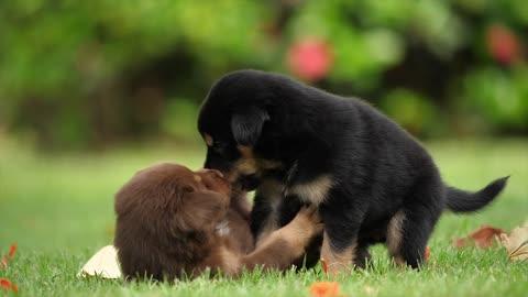 Puppies Friendship Joy