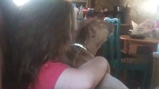 I think I'm a lap dog