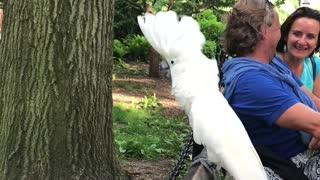 White Cockatoo Barks Like A Dog At The Dog Park