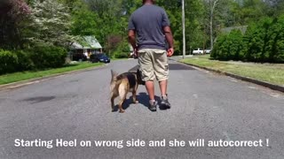 How To Make Dog Become aggressive Using Few Simple Steps.