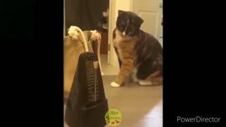 funny video animals 2.0