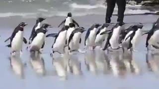 Penguin having fun