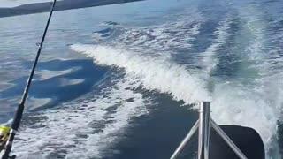 Dog Drives Boat