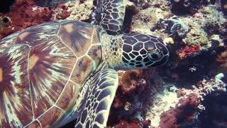 Die Schildkröten