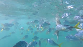Snorkeling with fish in the great barrier reef