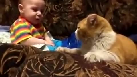 cat plays and headbutts baby