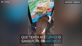Cão tenta comer sanduíche em anúncio