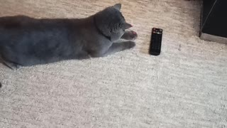 The cat is playing with a laser