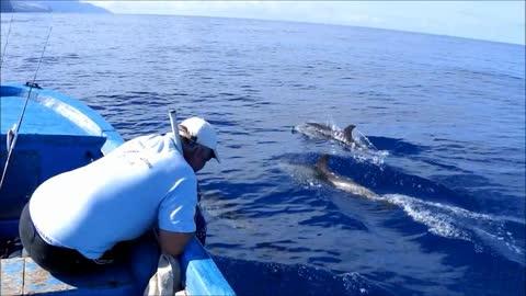 Gevlekte dolfijnen bij La Palma.