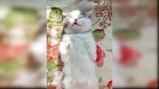 Cute and Funny Cat Videos Compilation #1
