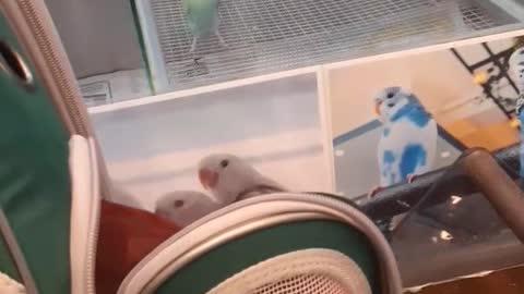Say hello to my cute birds!