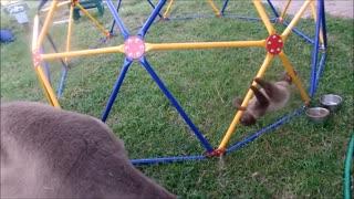 FUNNIEST Sloths