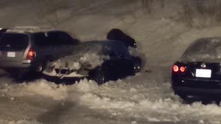 Close Encounter with Black Bear that Climbs into Car