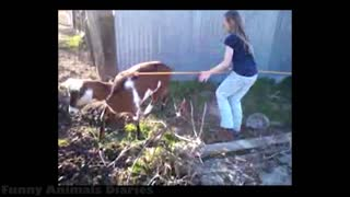 Funny animals with people,new video 2021