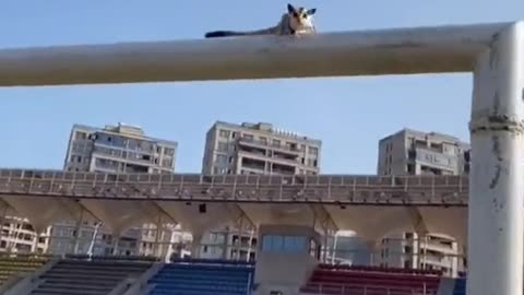 Nice Jump and Catch Really Amazing