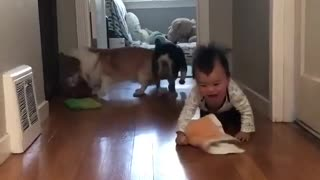 funny with children and animals