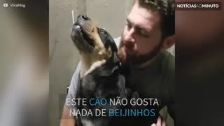 Este cão não gosta dos beijinhos do dono