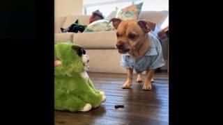 Dog warning doll best reaction 😂