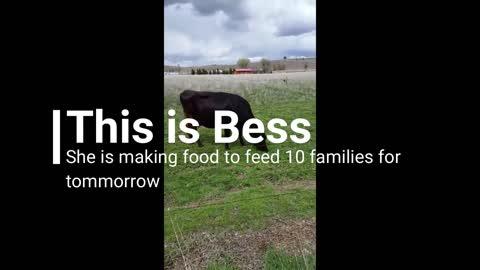 Super Bess