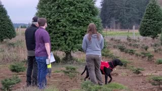 Looking for the perfect Christmas trees in 2020
