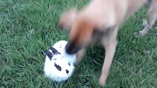 Doggo and Bunny Best Friends