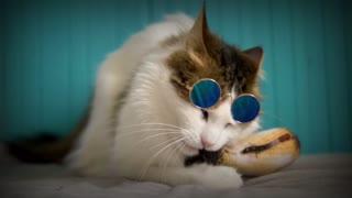 Watch cute cat