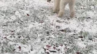 PILOT the SERVICE DOG PUPPY's SNOW!