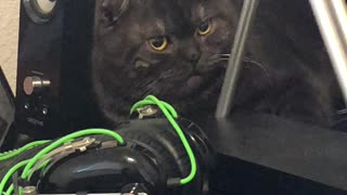 Perpetual Motion Machine Can't Move Stubborn Cat