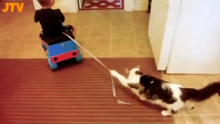Hillarious baby and cat fun moment