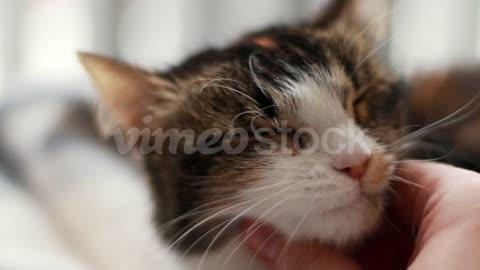 cute cat at home 1