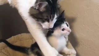 Awww el amor de madre