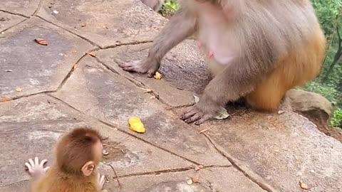 Old monkey hitting someone's little monkey