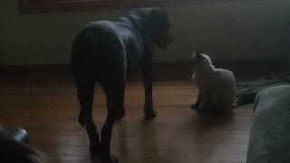 Cat dog ❤❤