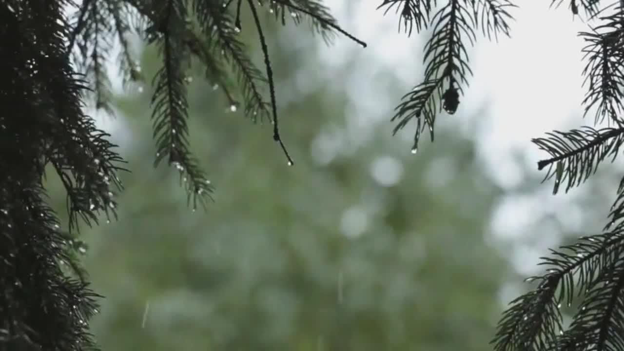 Gentle rainfall