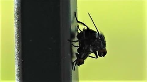 The Fu**!ng Flies Around Here... LITERALLY