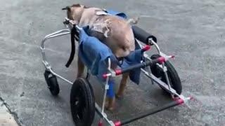 Perrito rescatado de las calles lucha por su vida tras sobrevivir a una gran intervención (2)