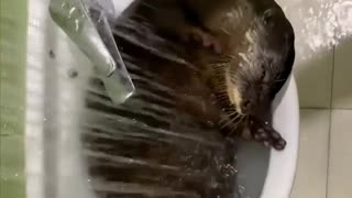 otter shower