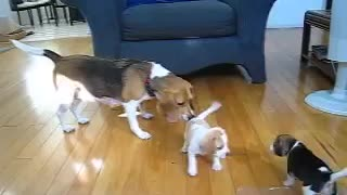 Playing with mom