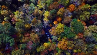 Beautiful Aerial View of a Forest