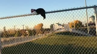 Cat Straddling Fence Freed From Suffocating Snack