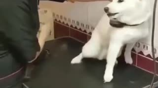 Funny Videos : Don't Touch Me... 😂😂