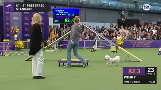 Best WKC Dog Show moments to celebrate the National Puppy Day